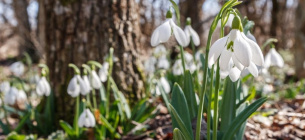 25 березня – свята, іменини, прикмети