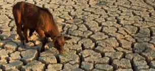 Кліматична криза вдарить по сільському господарству України
