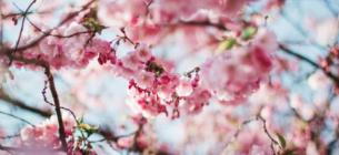 Синоптик розповів якою буде погода на Великдень та коли почнеться справжня весна