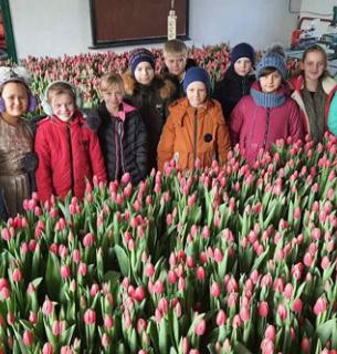 На Житомирщині учні та педагоги ліцею виростили 6,5 тисяч голландських тюльпанів