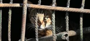 Комунальники заживо замурували тварин у підвалі