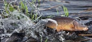З першого квітня діє заборона на вилов риби, яка починає нереститися