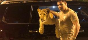 Харківський депутат задекларував живого африканського лева