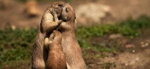 З 1 квітня у пташок, тварин — шлюбний період. Відпочивати в лісі можна, але неголосно!