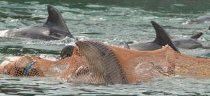 Неприродні умови утримання ламають дельфінам психіку