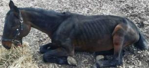 Тварини голодують чи хворіють? Світлини з музею під відкритим небом у Києві збурили громадськість