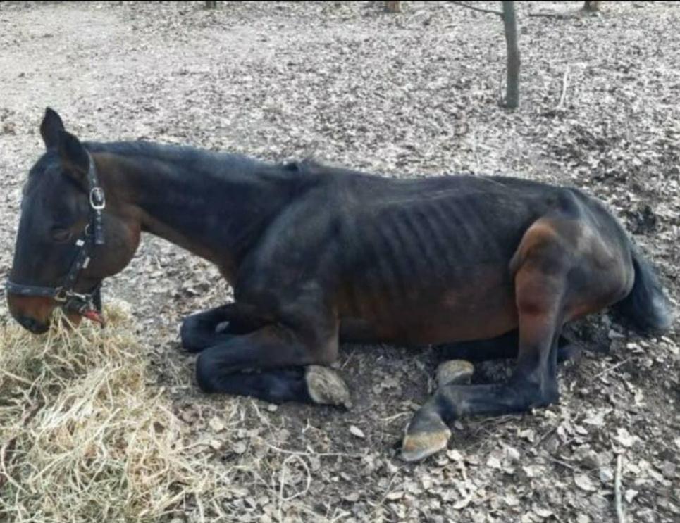 Животные голодают или болеют? Фотографии из музея под открытым небом в Киеве возмутили общественность