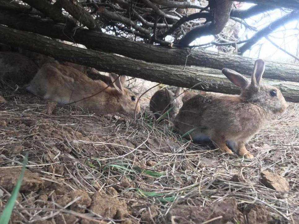 Фото Олег Булашев - У дику природу потраплять 8 самочок та 2 самці