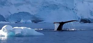 Українські полярники затоваришували з китом