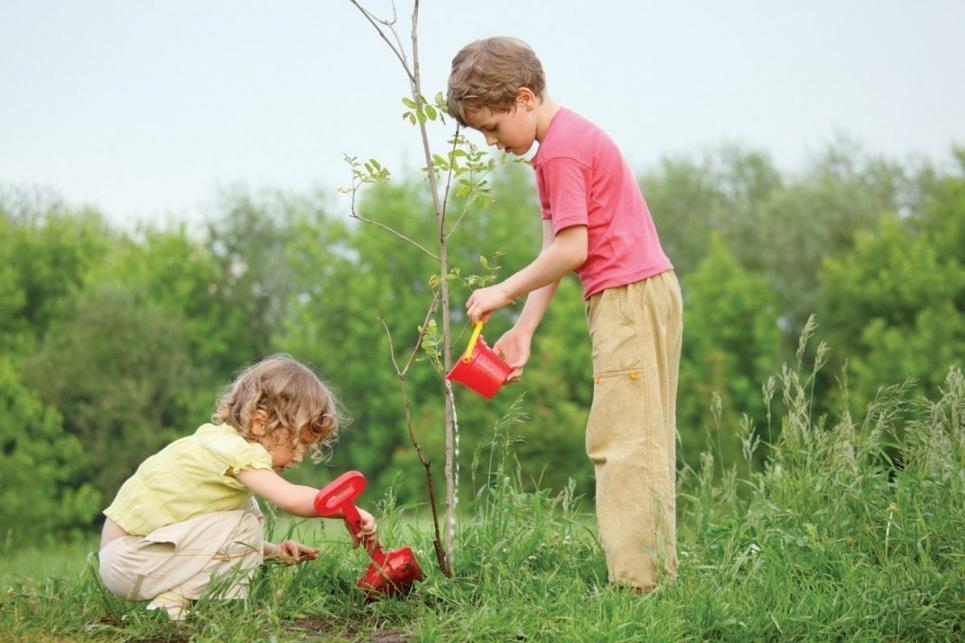 В Івано-Франківську можна зробити людині оригінальний подарунок: посадити на її честь дерево
