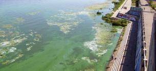 """Річка, яка в спеку почала """"цвісти"""", може бути небезпечною для людини"""