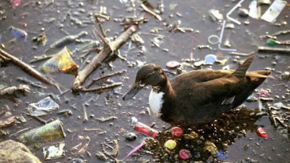 На Буковині зібрали понад 100 мішків сміття з берегів водойм.