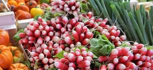 Стали відомі причини високих цін на ранні овочі