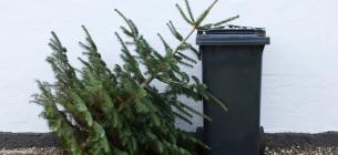 У Києві посеред весни хтось викинув новорічне деревце