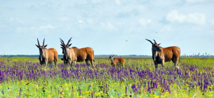 Екологічна акція «Марш парків» має допомогти вирішити проблеми вітчизняних національних парків