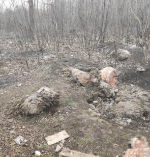 На околиці Харкова знайшли могильник із сотнями вбитих тварин