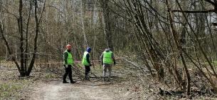 Забудовник почав нищити дерева у столичному нацпарку Голосіївський