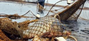 На Київщині троє браконьєрів наловили 6 кілограмів карасів