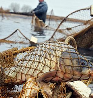 В Киевской области трое браконьеров наловили 6 килограммов карасей
