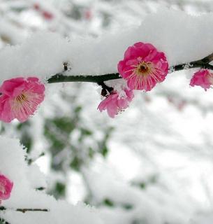 В Україні значно похолодає, синоптики обіцяють мінусові температури
