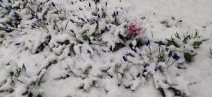 Черкащина та південна Київщина потонули в снігу