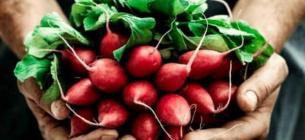 Корисні властивості редису: чому треба їсти цей яскравий ранній овоч