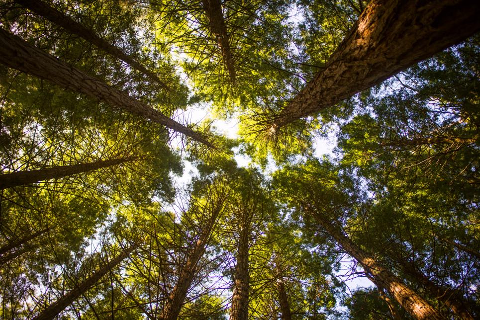 Експерти під час круглого столу обговорили, як зміниться статус самосійних лісів після початку земельної реформи