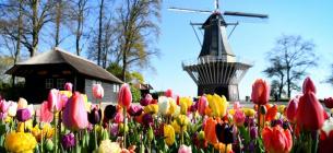 У Нідерландах почався сезон квітування тюльпанів