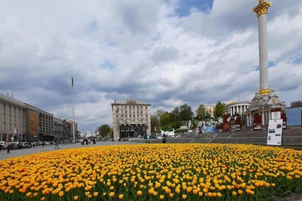 Око не відвести: столичні клумби квітують голландськими тюльпанами