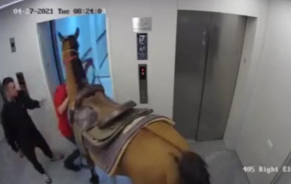 Чоловіки запхали коня до ліфта багатоповерхівки
