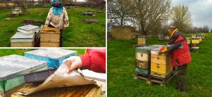 На Кіровоградщині працює єдина пасіка, де виробляють органічний мед, а продають в США. Фото: Суспільне Кропивницький