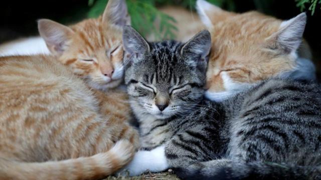 У мешканки Олександрії вдома живе 70 котів