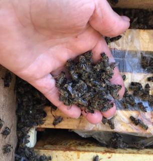 «Укрпошта» фактично вбила 8 мільйонів бджіл (ФОТО)
