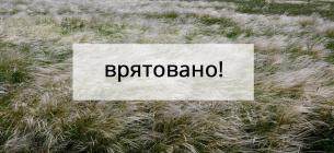 На Миколаївщині 182 гектари заповідних степів врятовані від оранки