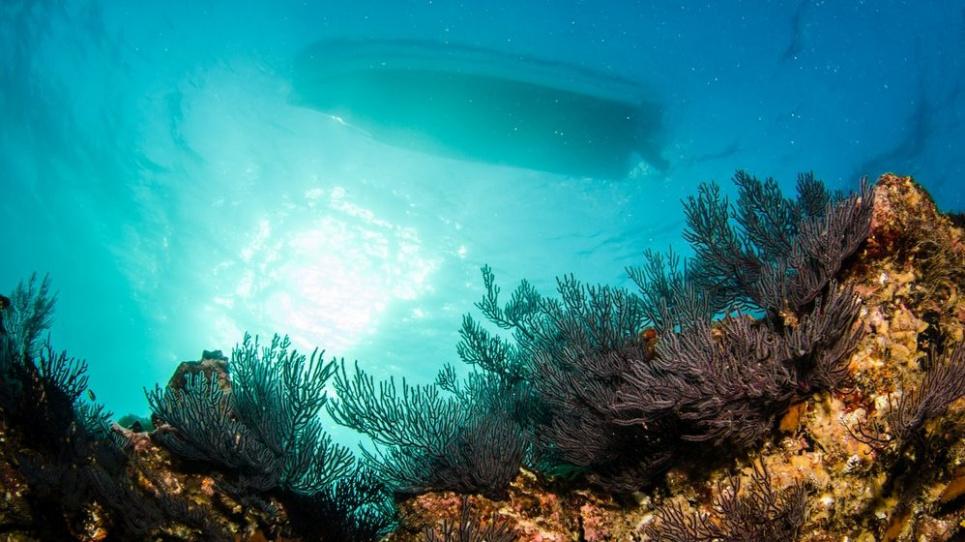 Коралові рифи загинуть через парникові гази
