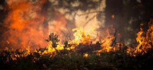 Посадовців ДСНС судитимуть за «липові» акти про гасіння пожеж на Луганщині