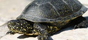 Фото: GeoMedia.TOP Черепахи дуже швидко реагують на небезпеку