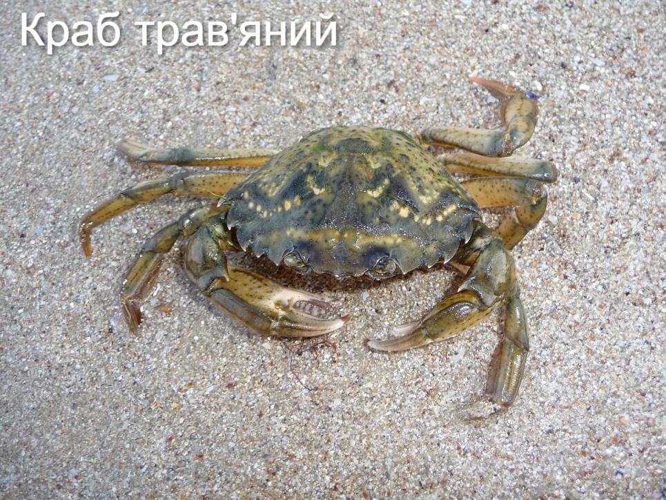 Фото: Фаны Черного моря