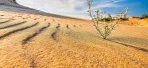 Фото: SPUTNIK KIEV Олешківські піски