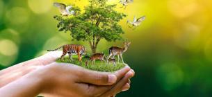 Всесвітній день навколишнього середовища: які ініціативи перебувають на розгляді екологічного комітету Ради