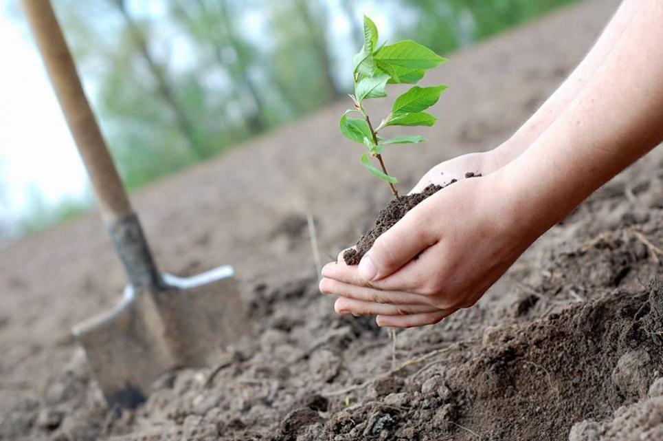 Фото: Боратинська сільська рада - Мережа сайтів сільських рад