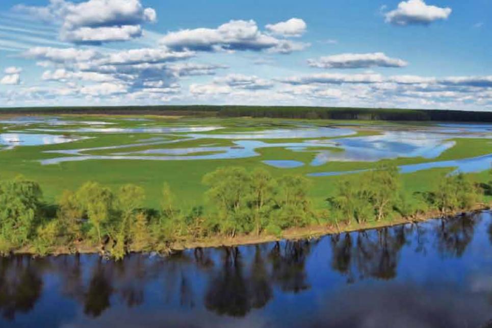 Україна втратить угіддя, які пом'якшують наслідки зміни клімату та накопичують вуглець