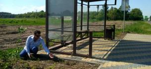 На 12 зупинках біля Луцька отрутохімікатами знищили чорнобривці. Фото: Суспільне