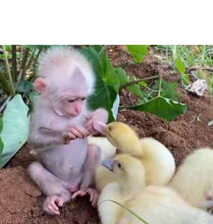 Ідилія у світі тварин