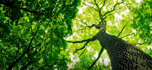 Мільярд дерев від Зеленського — це невігластво та дурний популізм — відомий еколог