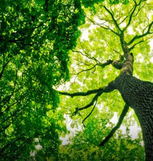Мільярд дерев від Зеленського — це невігластво і дурний популізм — відомий еколог