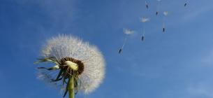 Сегодня Всемирный День ветра: 10 малоизвестных фактов о ветре