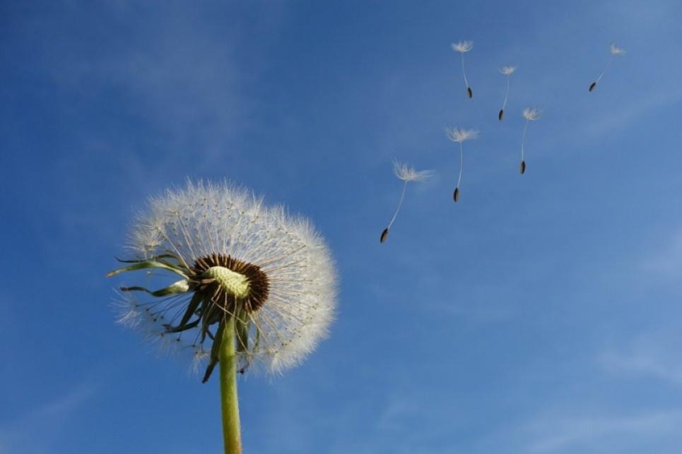 Сьогодні Всесвітній День вітру: 10 маловідомих фактів про вітер