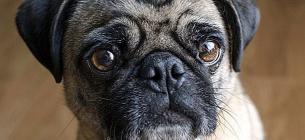 Фото: собака. Myhappypetshop