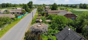 На Вінниччині є село, яке називають «лелечим краєм»